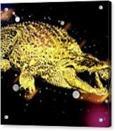 Nile River Crocodile Acrylic Print