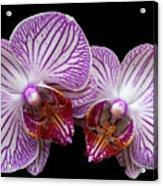2 Orchids Acrylic Print