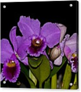 Orquid Acrylic Print