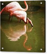 Paired Acrylic Print