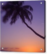 Palm Over The Beach Acrylic Print