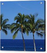 Palm Tree Tops Acrylic Print