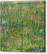 Patch Of Grass Acrylic Print