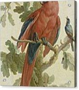 Plants And Animals Acrylic Print