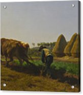 Cattle At Rest On A Hillside In The Alps Acrylic Print