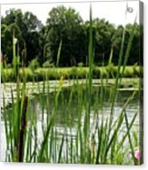 Pond At Beaver Island State Park In New York Acrylic Print