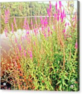 Pond In The Bershire Mountains, Massachusetts Acrylic Print