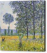 Poplars In The Sunlight Acrylic Print