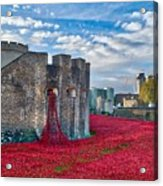 Poppies At The Tower Of London Acrylic Print