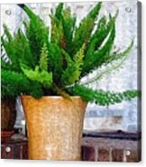 Potted Plant Acrylic Print