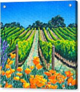 Presidio Vineyard Acrylic Print