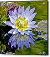 Purple Water Lily Pond Flower Wall Decor Acrylic Print