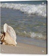 Queen Conch On The Beach Acrylic Print