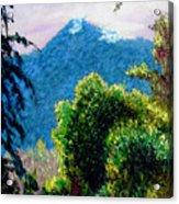Rain Forrest Acrylic Print