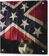 Rebel Cat Acrylic Print