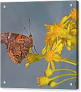 Red Admirable Butterfly Acrylic Print