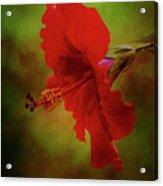 Red Hibiscus Art Acrylic Print