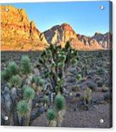 Red Rock Canyon Acrylic Print
