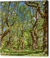 Relaxing Planes Trees Arbor Acrylic Print