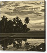 Rice Field Sunrise - Indonesia Acrylic Print