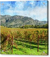 Rows Of Grapevines In Napa Valley Caliofnia Acrylic Print