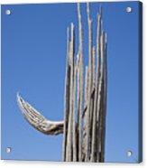 Saguaro Skeleton Acrylic Print