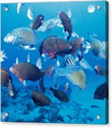 Saipan Marine Life Acrylic Print