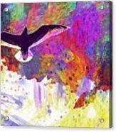 Seagull Blue Sky Freedom Air Fly  Acrylic Print
