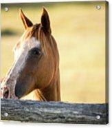 Single Horse Acrylic Print