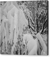 Snow Covered Trees In The North Carolina Mountains During Winter Acrylic Print