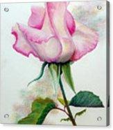 So Pink Acrylic Print