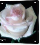 Soft Pink Rose Bud Acrylic Print