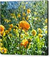 Spring Flowers In The Rain Acrylic Print