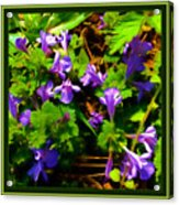 Spring Time Series Acrylic Print