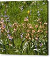 Springtime In South Africa Acrylic Print