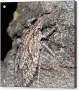 Stink Bug Acrylic Print