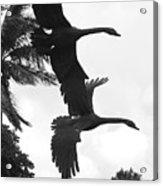 Stone Birds Acrylic Print
