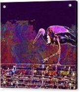 Stork Bird Fly Plumage Nature  Acrylic Print