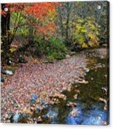 Sugar Maple Birch River Acrylic Print