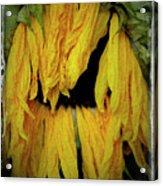 Sunflower 1134 Acrylic Print
