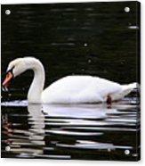 Swan Song Acrylic Print
