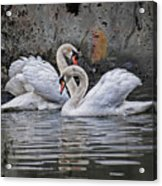 Tango Of The Swans Acrylic Print