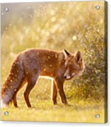 The Fox And The Fairy Dust Acrylic Print