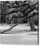 The Giving Tree Acrylic Print