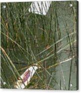 The Lodge At Blue Lakes Decaying Fish Acrylic Print
