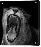The Roar Acrylic Print
