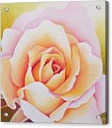 The Rose Acrylic Print by Myung-Bo Sim