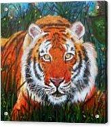 Tiger- Large Work Acrylic Print