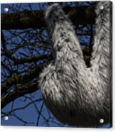 Tree Decorated With Apes Acrylic Print