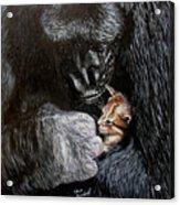 Tribute to Koko Acrylic Print